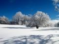 Février - Longue sieste : pied dans la neige, tête au soleil