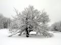 01 - Dormance hivernale
