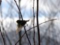 oiseau_07
