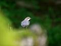 oiseau_10
