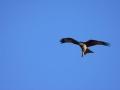 oiseau_12