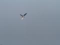 oiseau_14