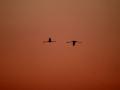 oiseau_15