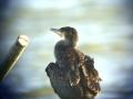 oiseau_19