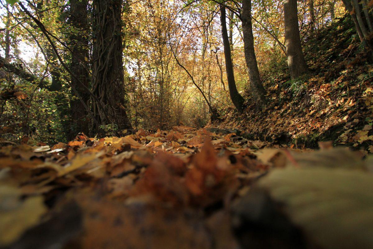 Prendre le chemin de l'automne