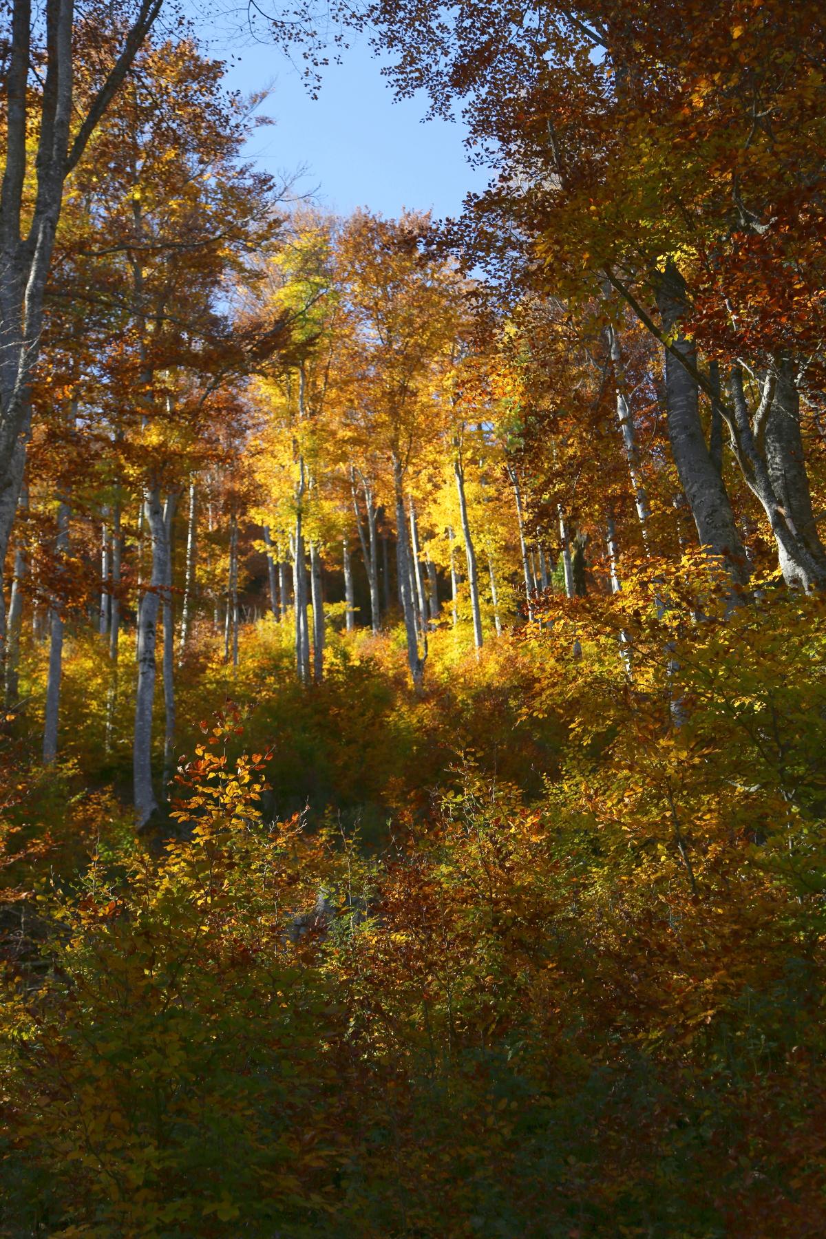 Lux en automne - Lux in autumn