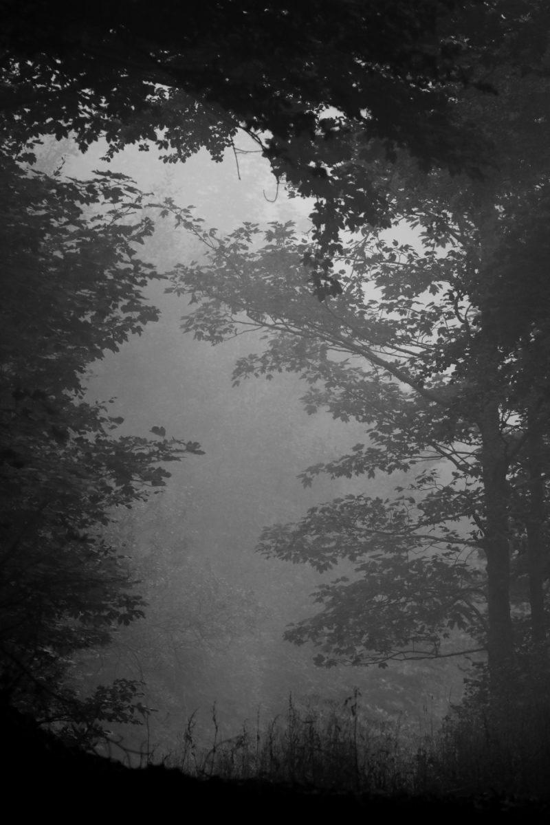 De la brume dans la Drôme juste avant le brame c'est loin d'etre un drame...